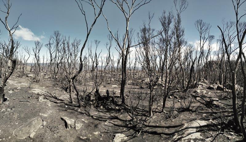 Остатки огня Forrest в Тасмании стоковое изображение rf