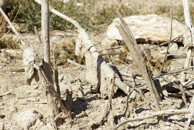 Остатки польностью сухой вегетации, покрытые солью стоковые изображения