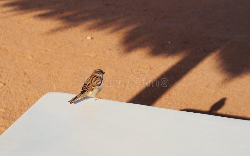 Остатки птицы воробья в тени стоковое изображение