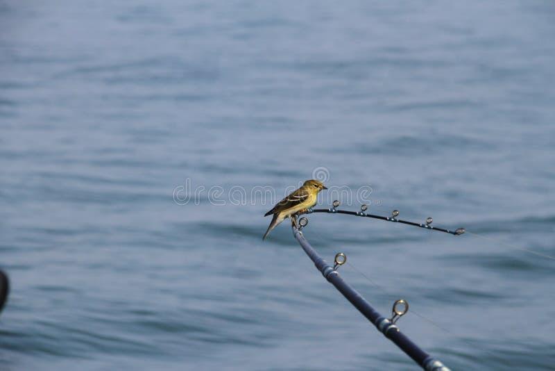 Остатки птицы на рыболовной удочке стоковые фото