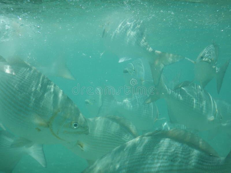 Остервенение рыб стоковое фото