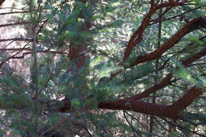 Остин, заводь, положение, воссоздание, зона, - припаркуйте включать район дикой природы Оно расположено в Sonoma County стоковое изображение rf