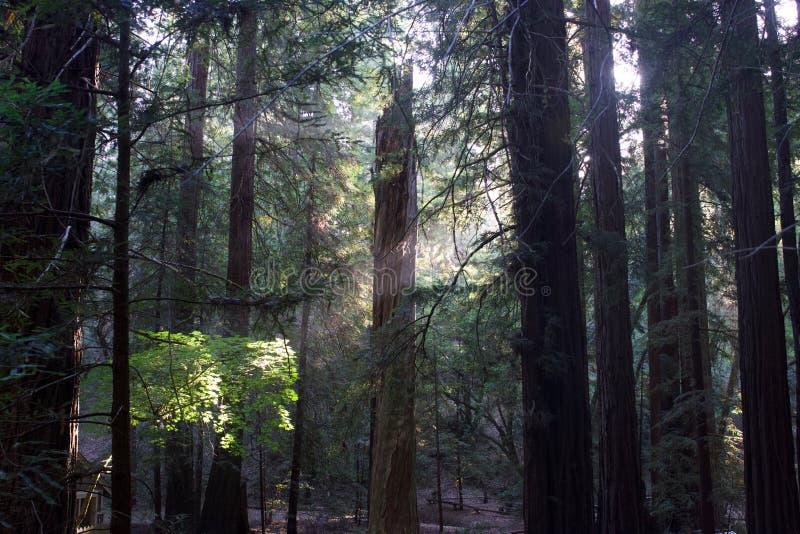 Остин, заводь, положение, воссоздание, зона, - припаркуйте включать район дикой природы Оно расположено в Sonoma County стоковое изображение