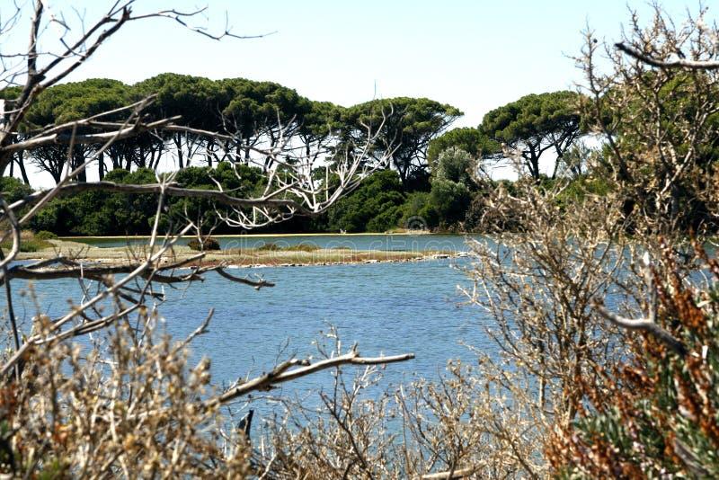Download Острова Франция Lerins стоковое изображение. изображение насчитывающей острова - 81801697
