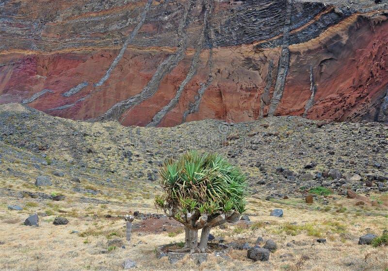 Острова Desertas-Мадейра стоковые фотографии rf