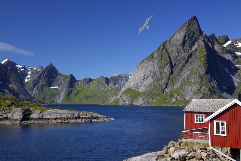 Острова Lofoten стоковые фотографии rf