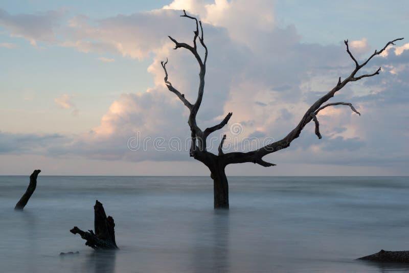 Остров быков стоковые фотографии rf