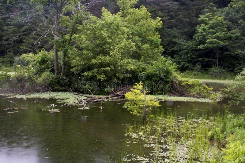 Остров в озере на дождливый день стоковые фото