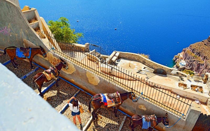 Остров Греция Santorini туристической достопримечательности пути осла стоковые изображения rf