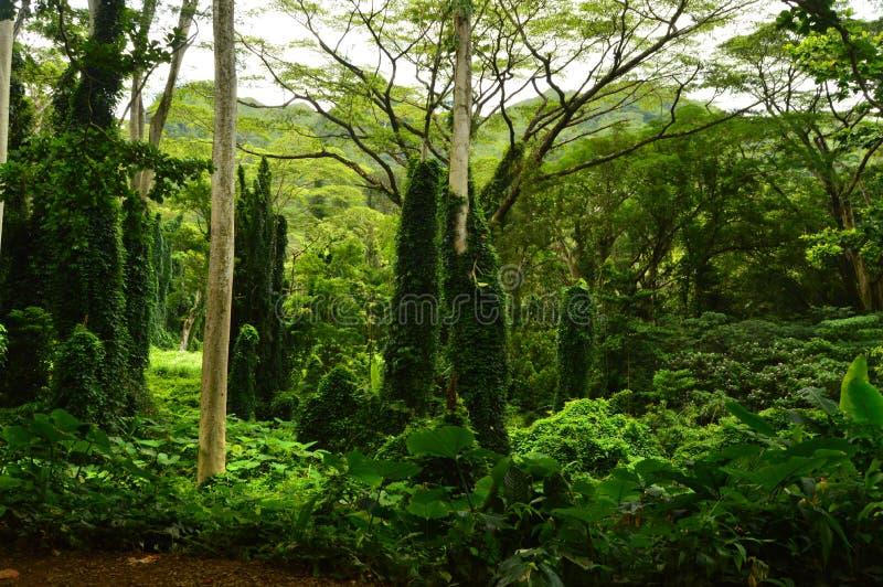 Остров джунглей после утра дождя стоковые изображения