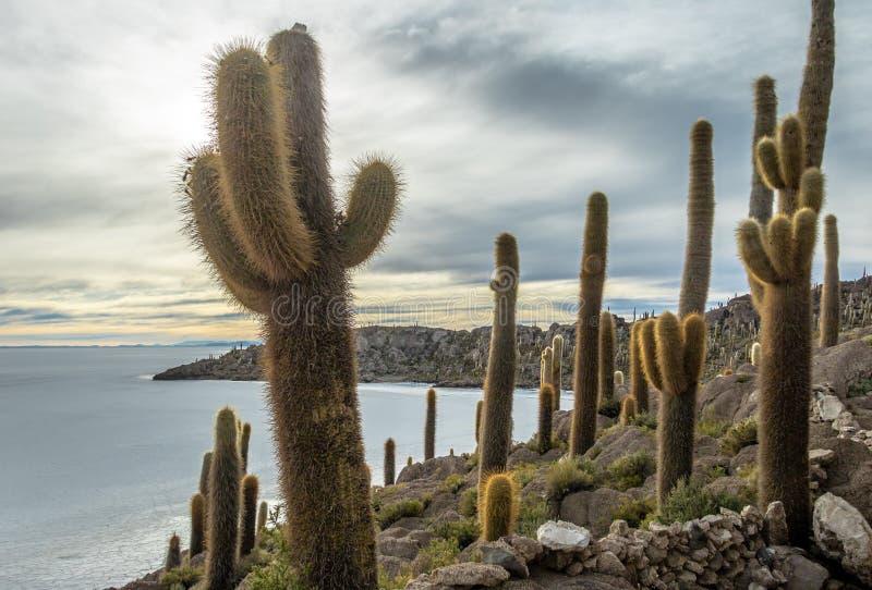 Остров кактуса Incahuasi в соли Салара de Uyuni плоском - отдел Potosi, Боливия стоковые изображения