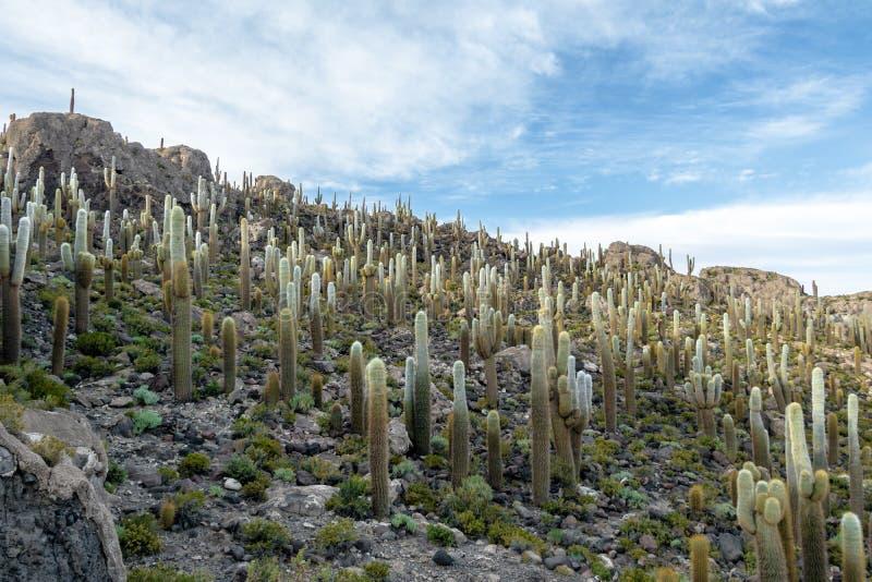 Остров кактуса Incahuasi в соли Салара de Uyuni плоском - отдел Potosi, Боливия стоковая фотография rf