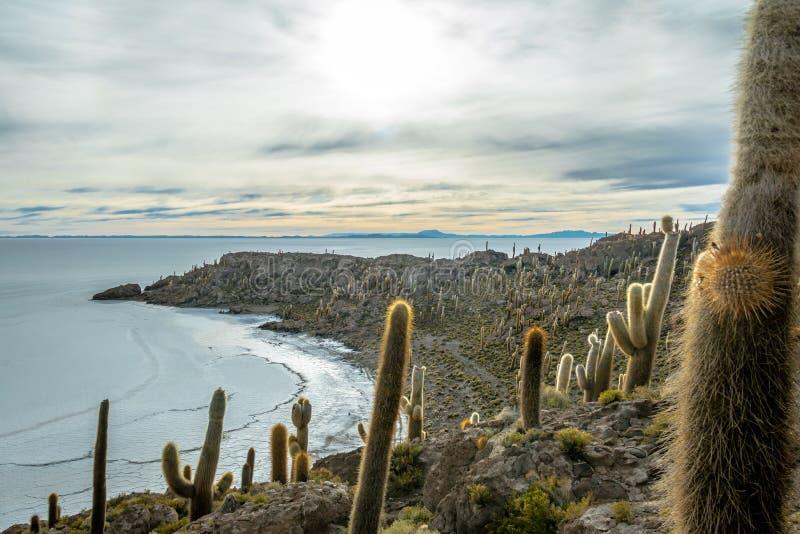 Остров кактуса Incahuasi в соли Салара de Uyuni плоском - отдел Potosi, Боливия стоковые фото