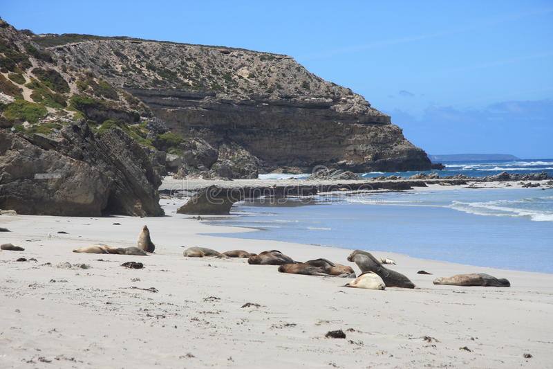 Остров кенгуруа, Австралия стоковое изображение