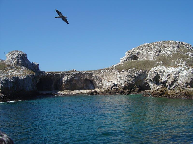 остров птицы стоковое изображение