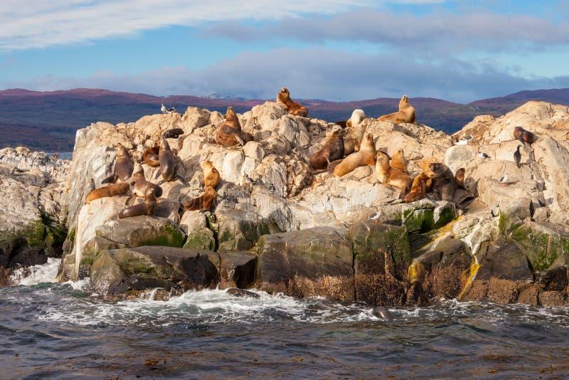 Остров уплотнения около Ushuaia стоковое изображение rf