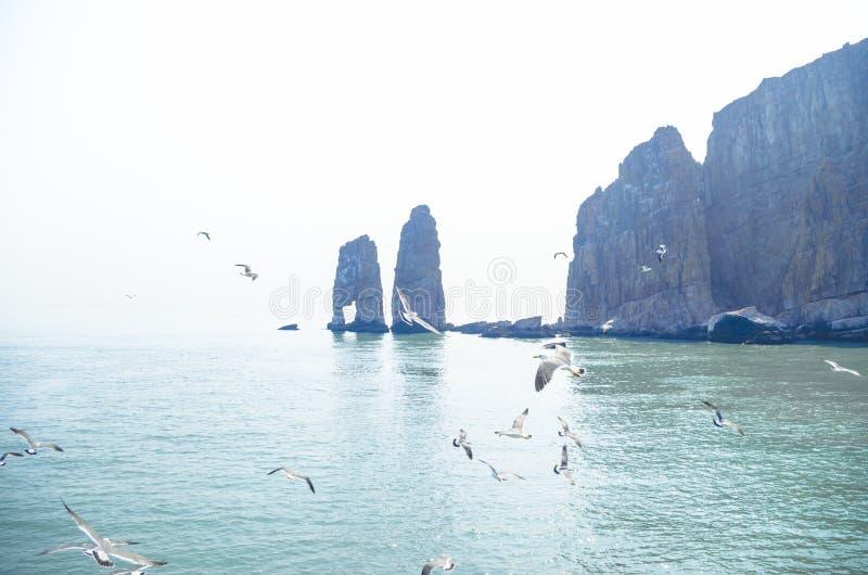 Остров & чайка Changdao стоковая фотография rf