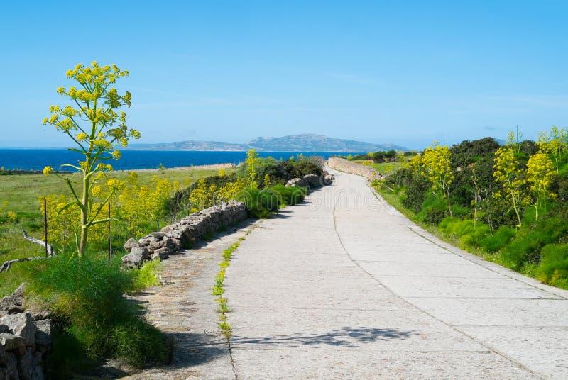 Остров Asinara в Сардинии, Италии стоковые изображения rf