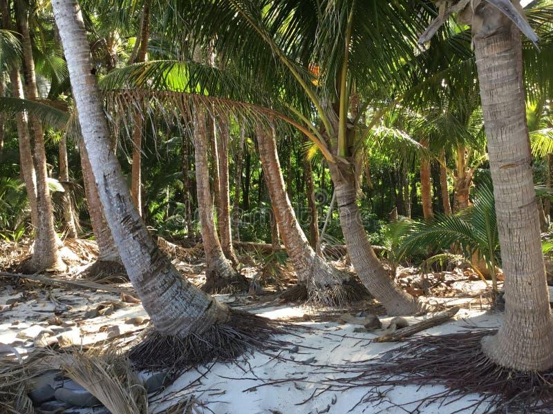 Остров Boca Brava стоковое изображение rf
