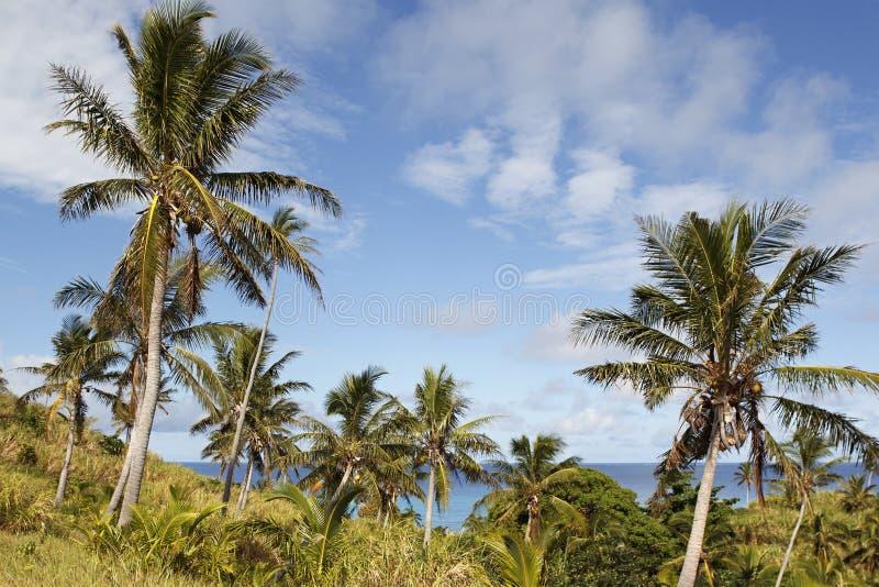 Остров Dravuni, Фиджи стоковое фото rf