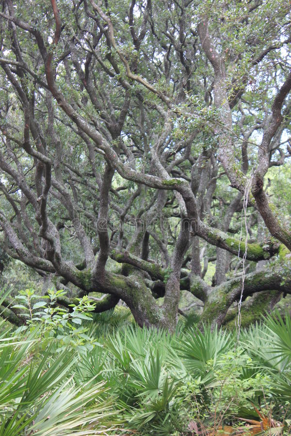 Остров GA Камберленда дубов в реальном маштабе времени стоковые фото