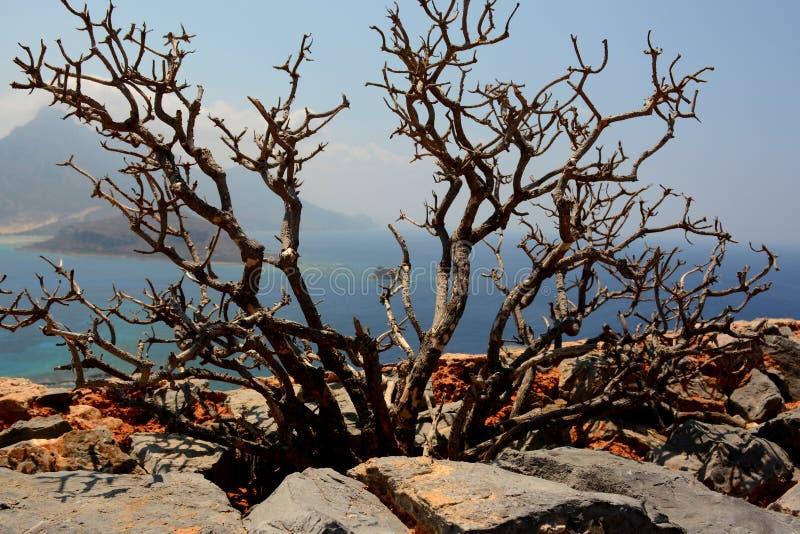 Остров Gramvousa, Крит! Терновый куст! стоковая фотография rf
