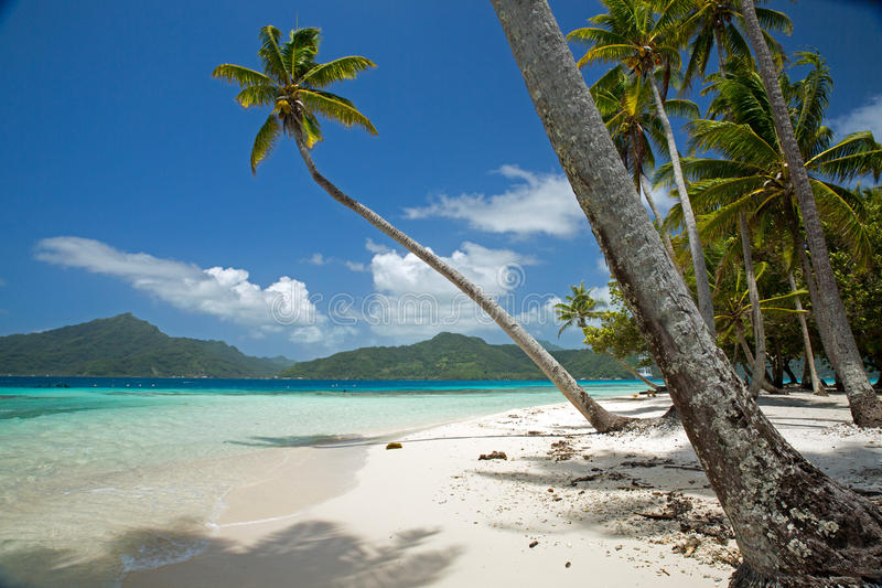 Остров Motu в Таити стоковое фото rf