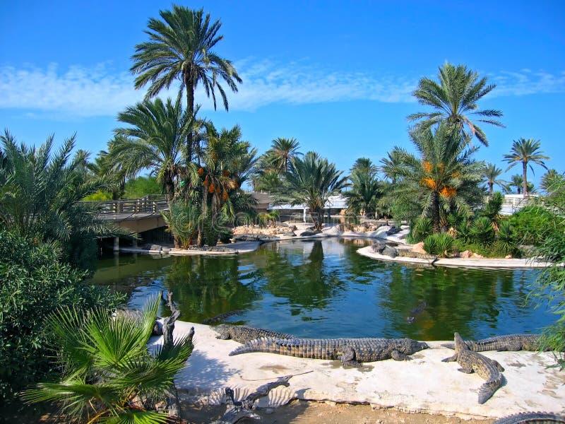 остров tunis фермы djerba крокодилов стоковое изображение