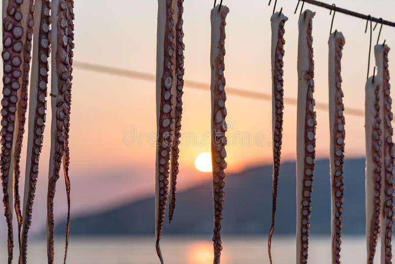 Осьминог на линии на заходе солнца в Пелопоннесе, Греции стоковая фотография rf