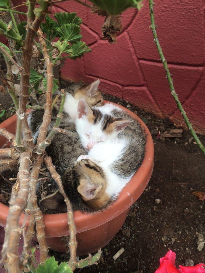 Download Ослабьте котят стоковое фото. изображение насчитывающей лето - 40577678