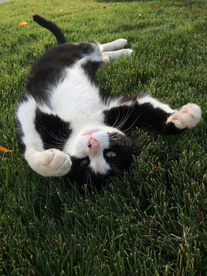Ослаблять в траве стоковые фото