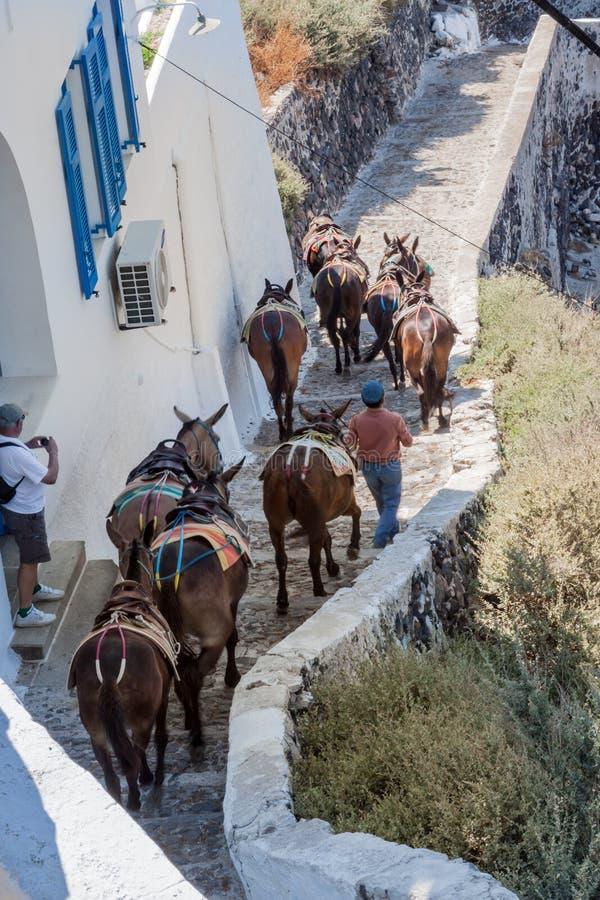 Ослы Fira Santorini стоковые фото