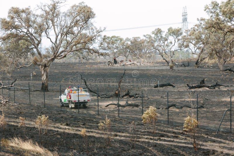 Отава лесных пожаров Epping стоковые фотографии rf