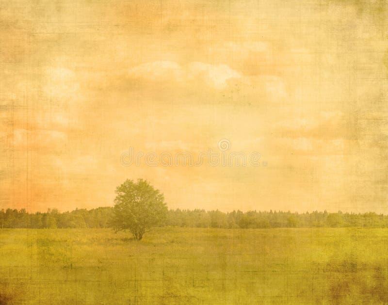 Отбеленное изображение вала стоковое изображение