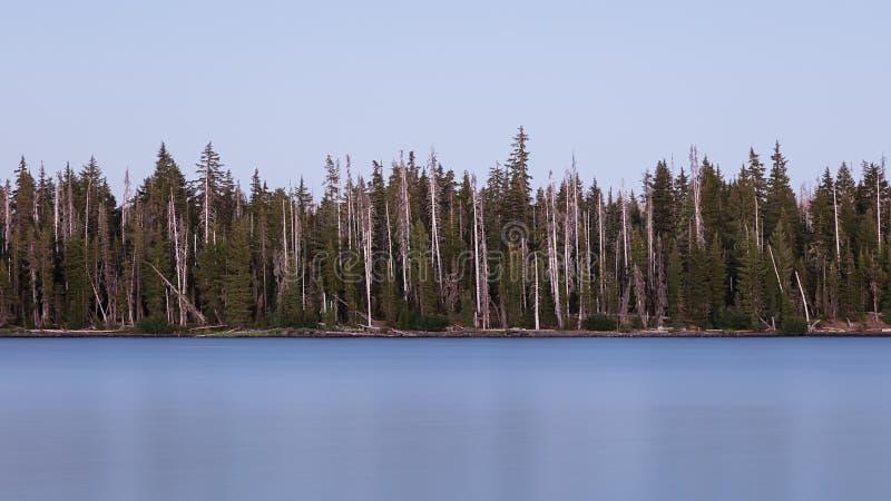 Отбеленные деревья на большом озере, Орегоне, национальном лесе Willamette стоковая фотография