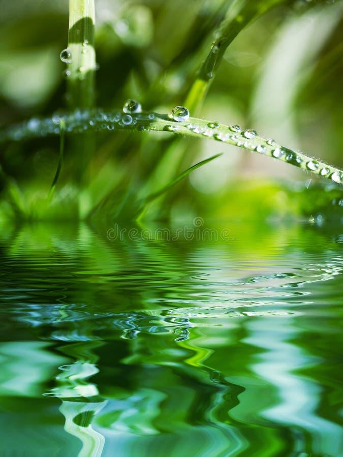 отбортовывает воду травы лезвия стоковые фото