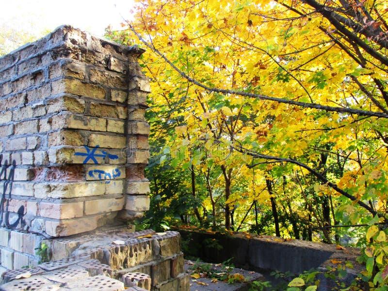 Отброшенный дом, осенние листья стоковое изображение rf