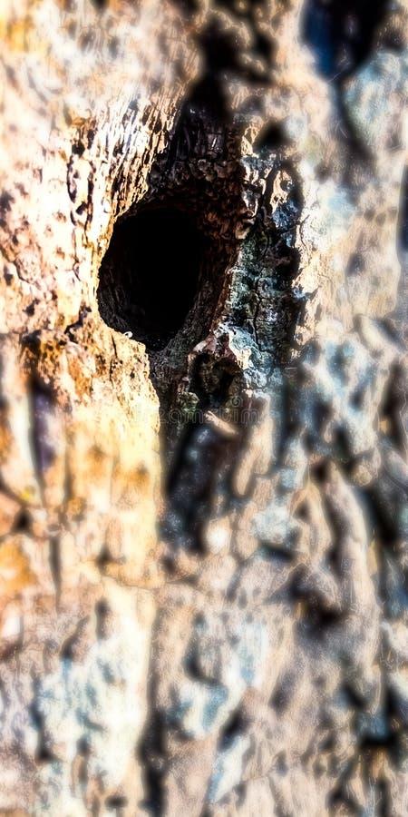 Отверстие в дереве стоковое изображение