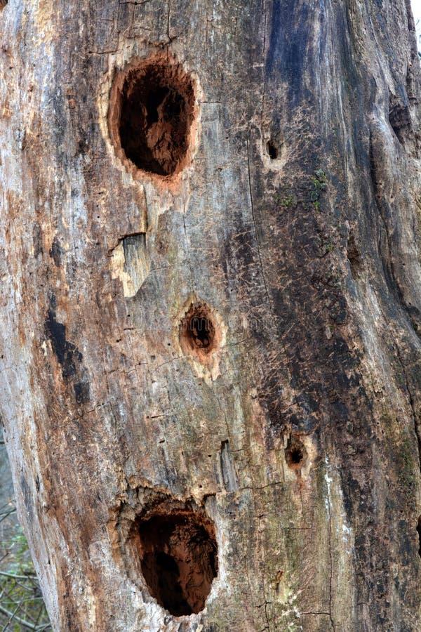 Отверстия в старом дереве стоковая фотография