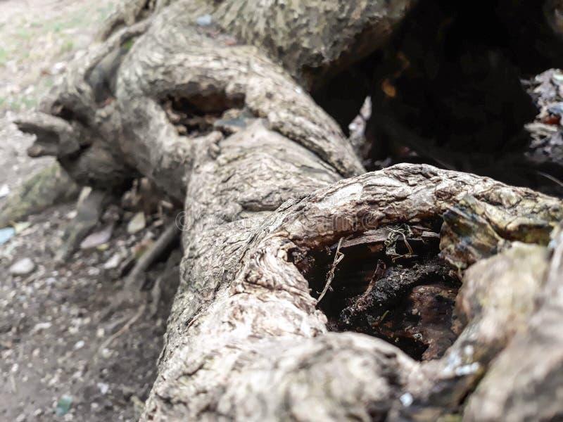 Отверстия в старые деревья стоковое изображение rf