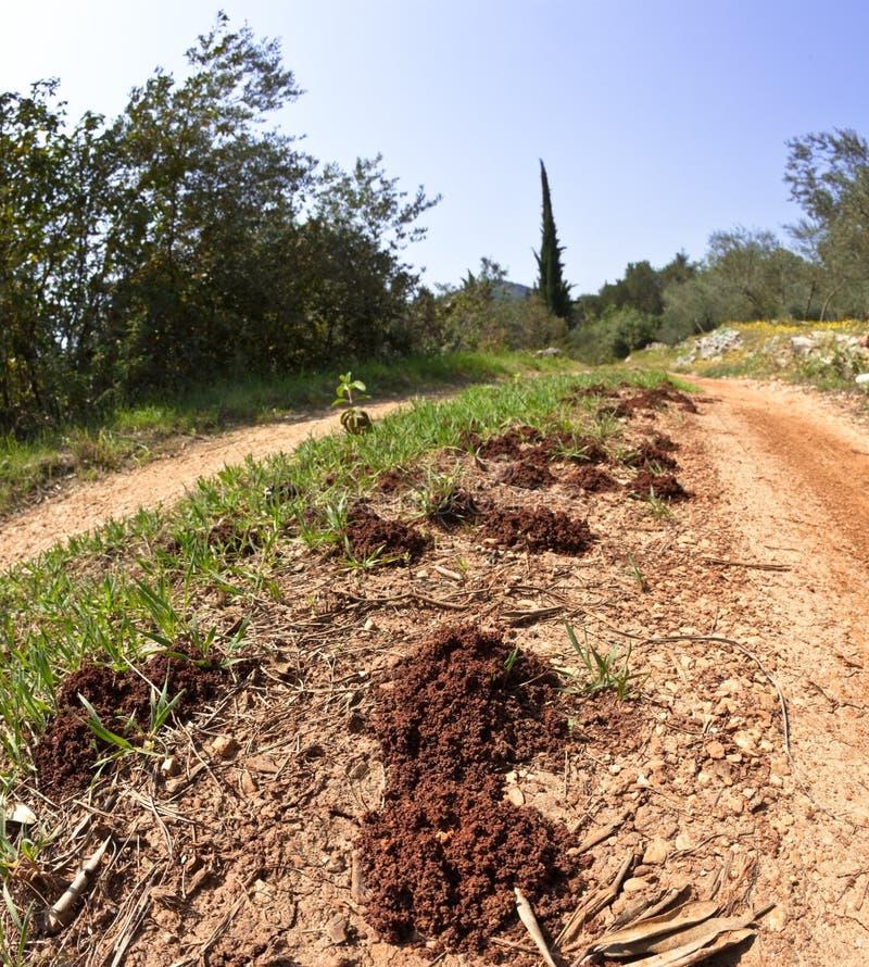 отверстия муравея стоковая фотография rf