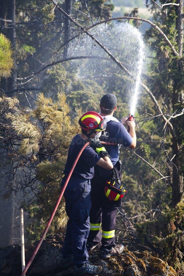 отдел тушит пущу пожара стоковая фотография