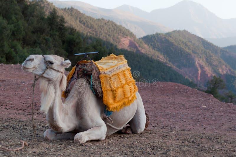 отдыхать верблюда стоковое изображение