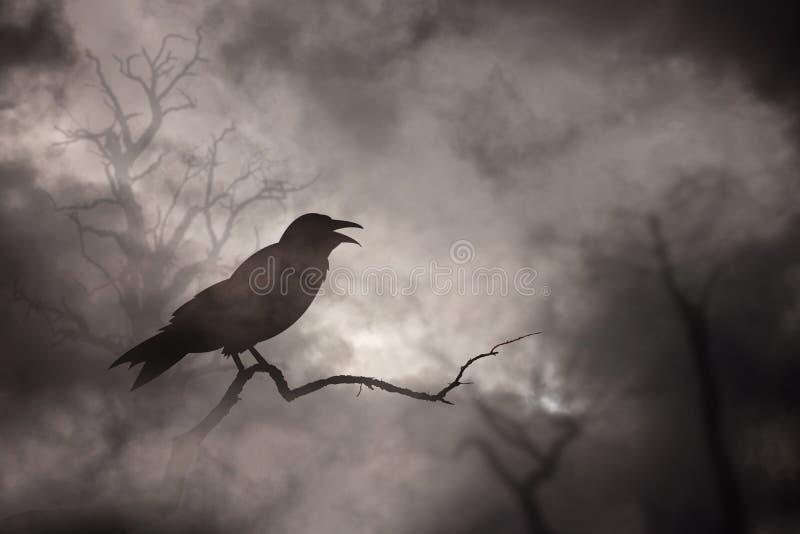 Отдыхать вороны или ворона стоковая фотография