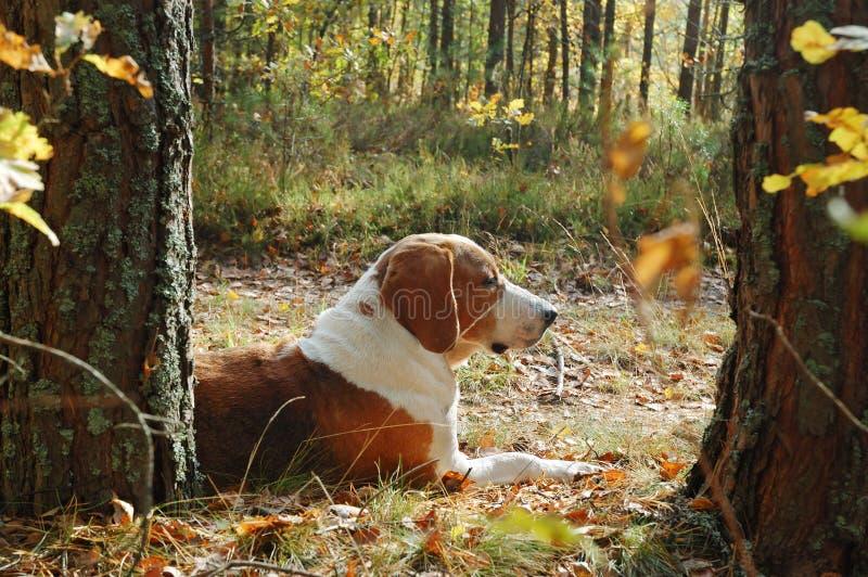 отдыхать собаки стоковая фотография