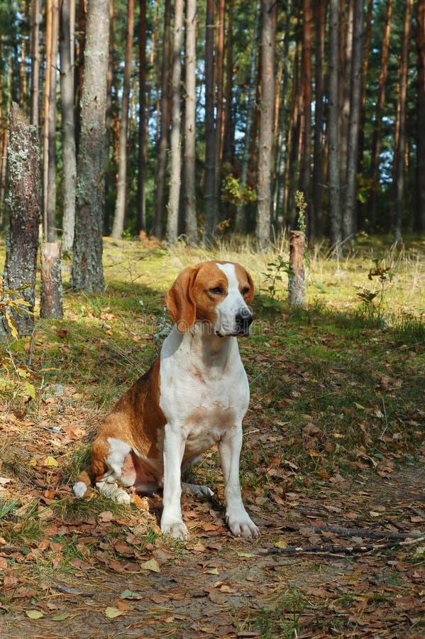 отдыхать собаки стоковое изображение rf
