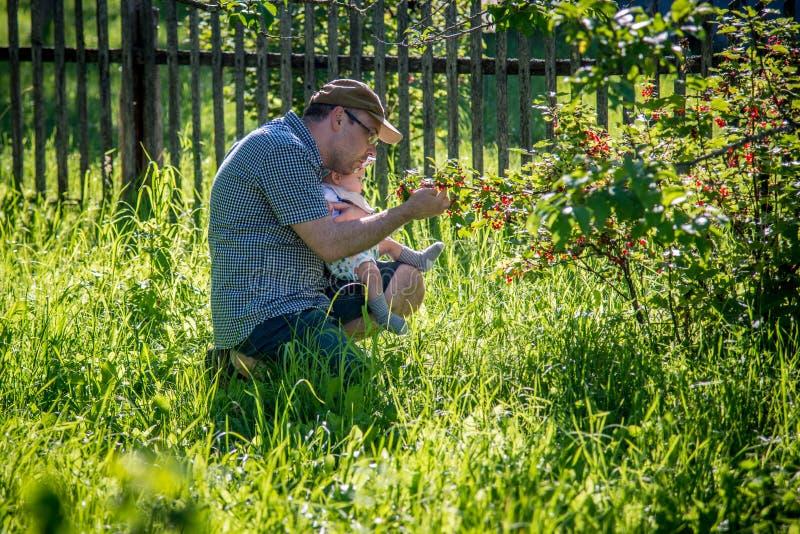 Отец с ребенком в саде лета комплектуя ягоды стоковая фотография