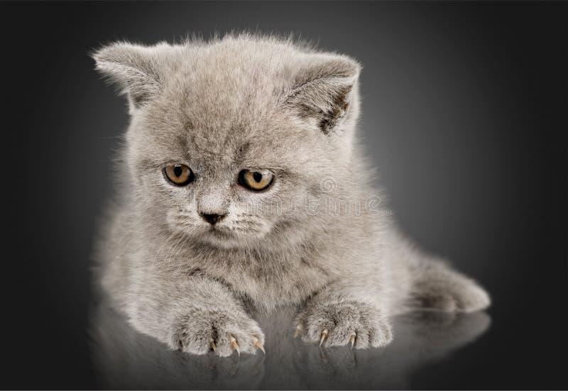 Отечественное cat стоковые изображения rf
