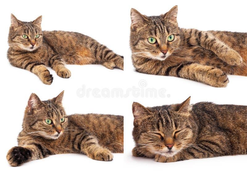 Download Отечественное cat стоковое фото. изображение насчитывающей любимчики - 81809802