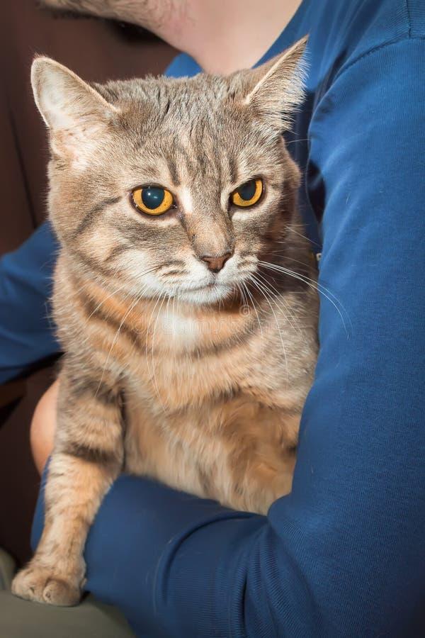 Отечественные кот и человек tabby стоковое фото